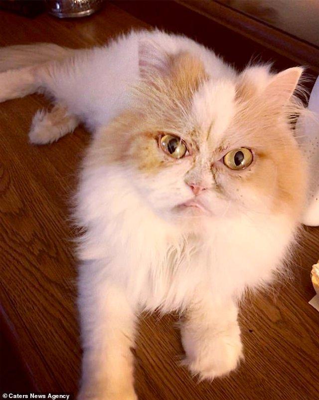 Ви йому не подобаєтесь: знайдено нового сердитого кота (фото) - фото 331427