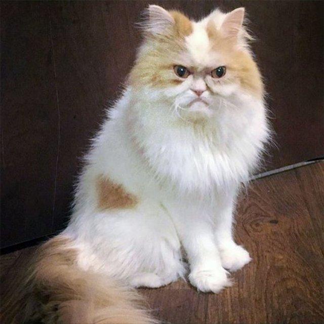 Ви йому не подобаєтесь: знайдено нового сердитого кота (фото) - фото 331428