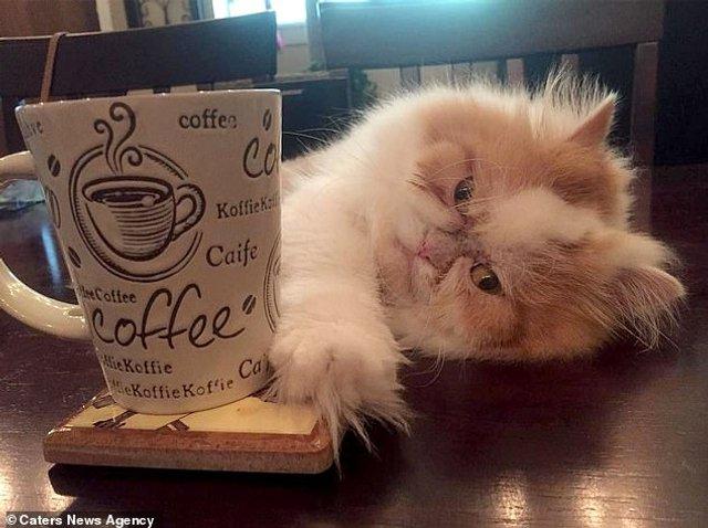 Ви йому не подобаєтесь: знайдено нового сердитого кота (фото) - фото 331429