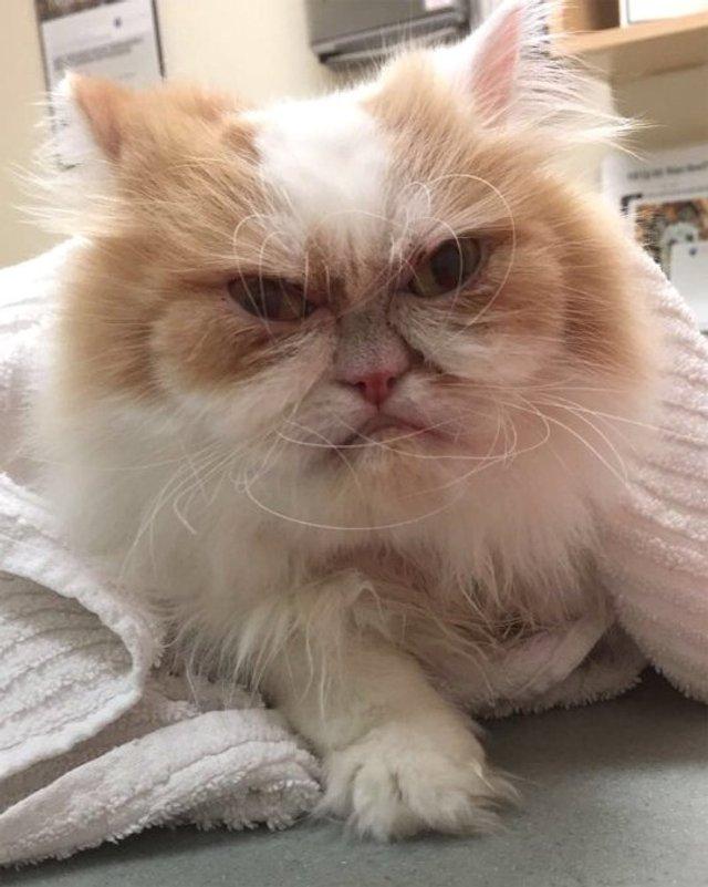 Ви йому не подобаєтесь: знайдено нового сердитого кота (фото) - фото 331431