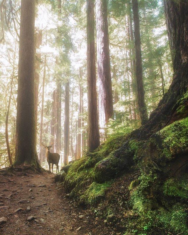 Особлива краса Канади, яку не бачать туристи: яскраві фото - фото 332776