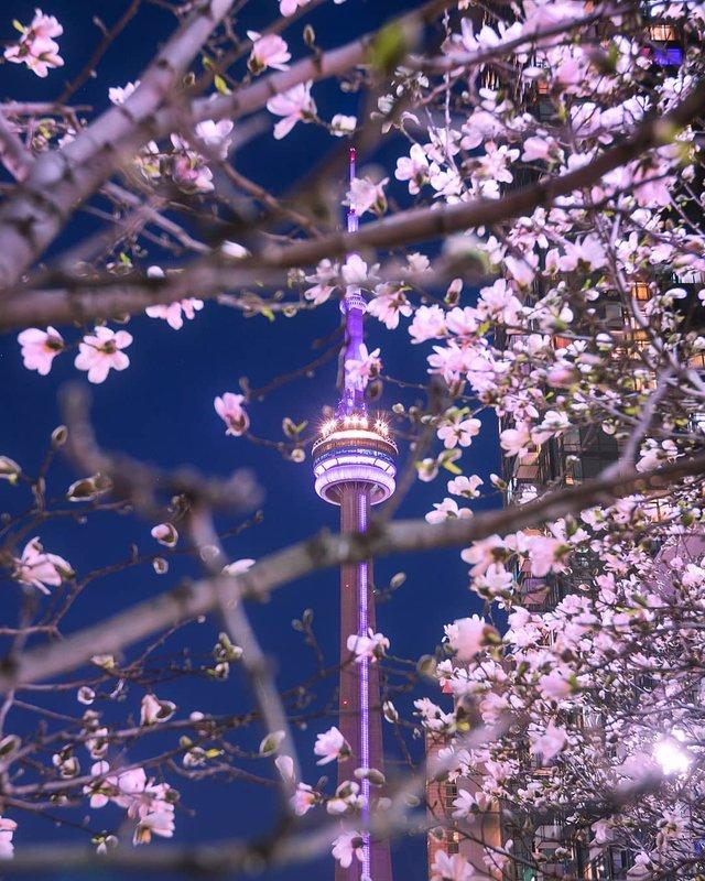 Особлива краса Канади, яку не бачать туристи: яскраві фото - фото 332786