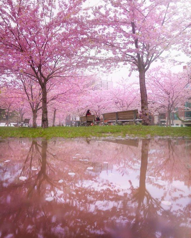 Особлива краса Канади, яку не бачать туристи: яскраві фото - фото 332787