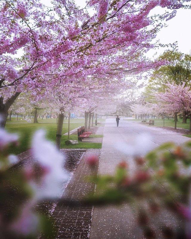 Особлива краса Канади, яку не бачать туристи: яскраві фото - фото 332793