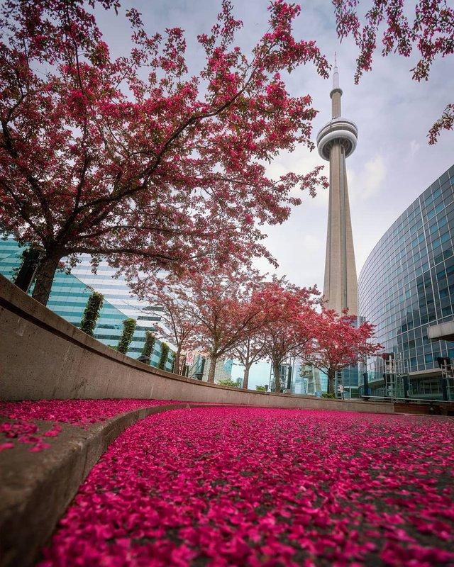 Особлива краса Канади, яку не бачать туристи: яскраві фото - фото 332794