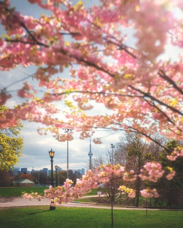 Особлива краса Канади, яку не бачать туристи: яскраві фото - фото 332795