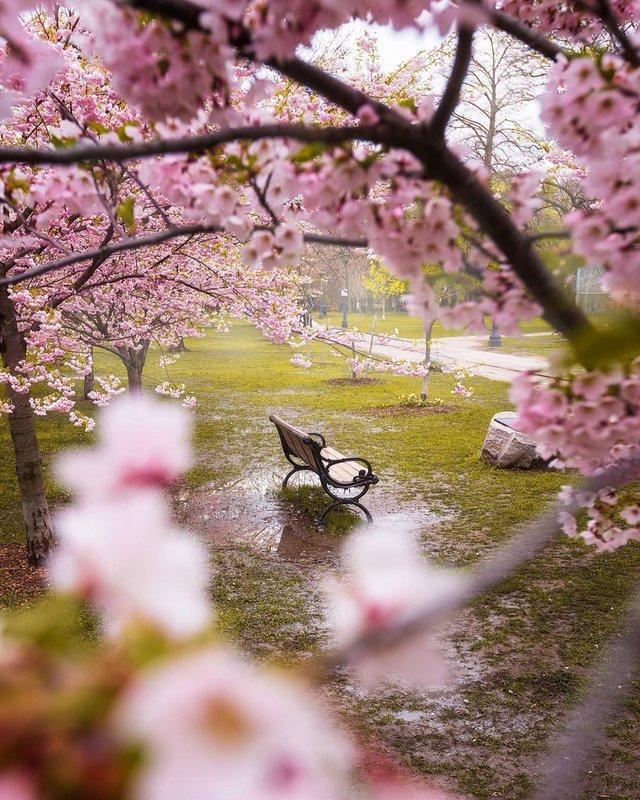 Особлива краса Канади, яку не бачать туристи: яскраві фото - фото 332796