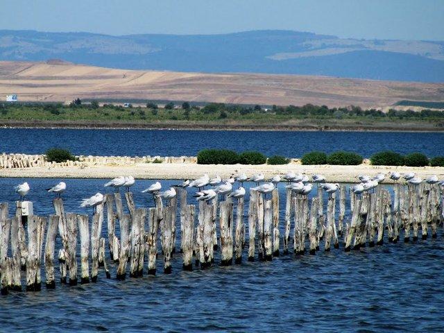 Бургаське озеро - фото 333547
