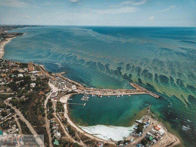 Купатися заборонено! Позеленіле море Одеси у свіжих знімках - фото 333585