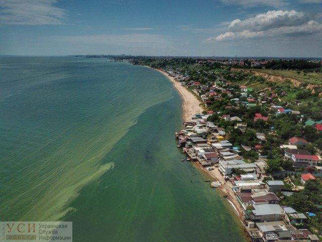Купатися заборонено! Позеленіле море Одеси у свіжих знімках - фото 333586