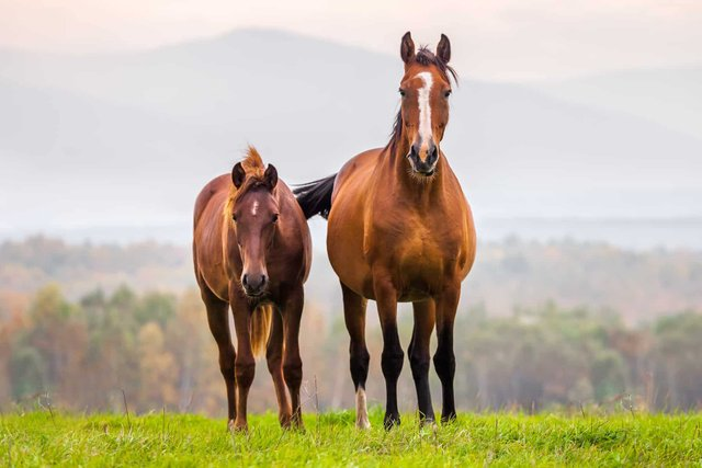 У цей день наші предки дякували коням за виконану роботу - фото 333835