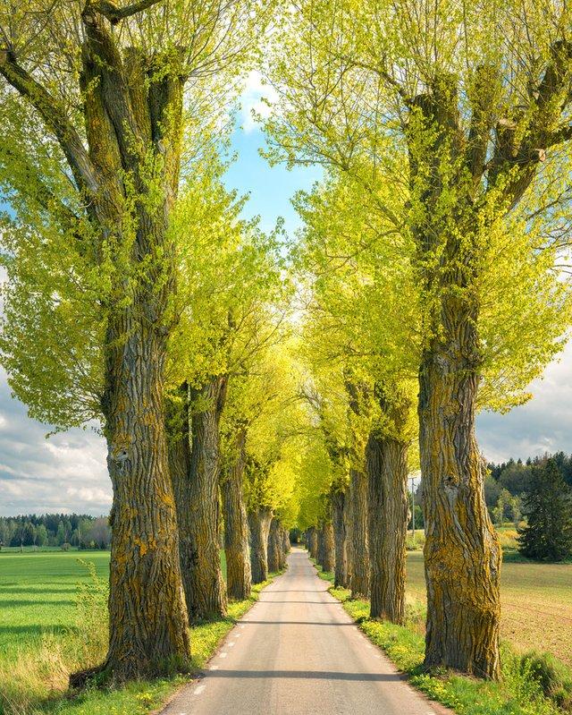 Захоплива подорож Швецією у яскравих фото - фото 334173