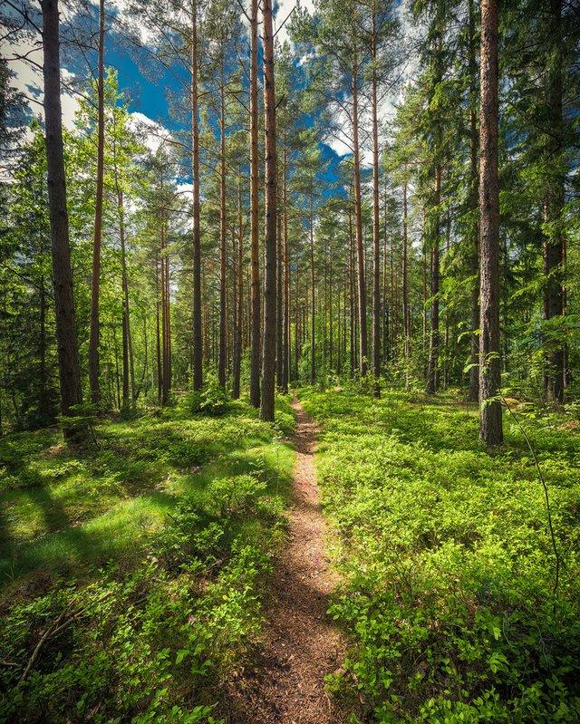 Захоплива подорож Швецією у яскравих фото - фото 334177