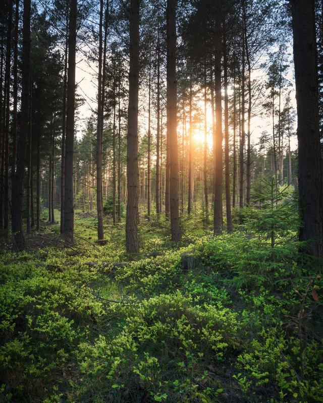 Захоплива подорож Швецією у яскравих фото - фото 334180