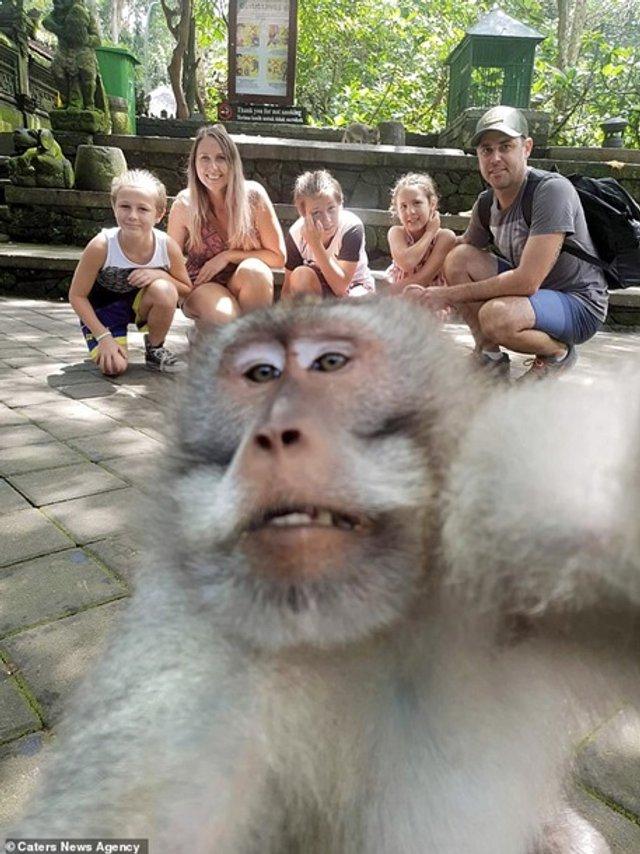 Зухвала мавпа зняла селфі із середнім пальцем (фото) - фото 334413