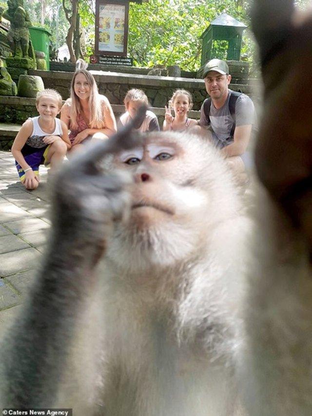 Зухвала мавпа зняла селфі із середнім пальцем (фото) - фото 334414