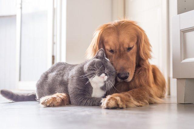 Собаки навчились використовувати емоції, які подобаються людям - фото 335279
