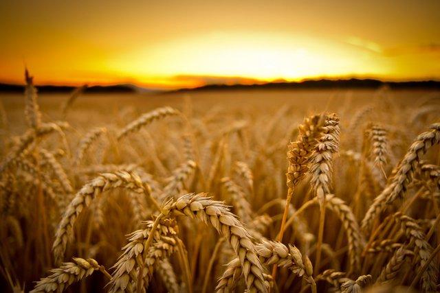 Сонячна погода до гарного врожаю - фото 335325