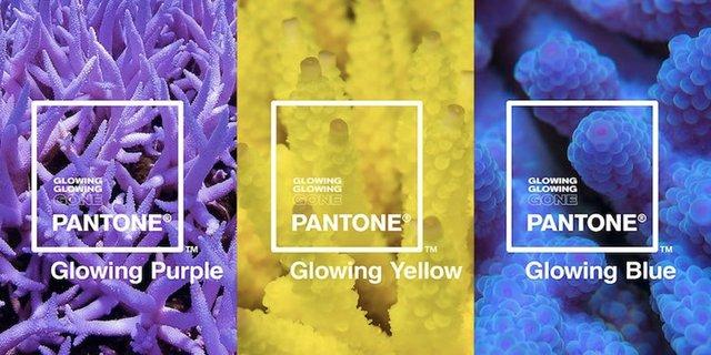 Три нові відтінки року: навіщо Інститут кольору Pantone зробив це - фото 335496
