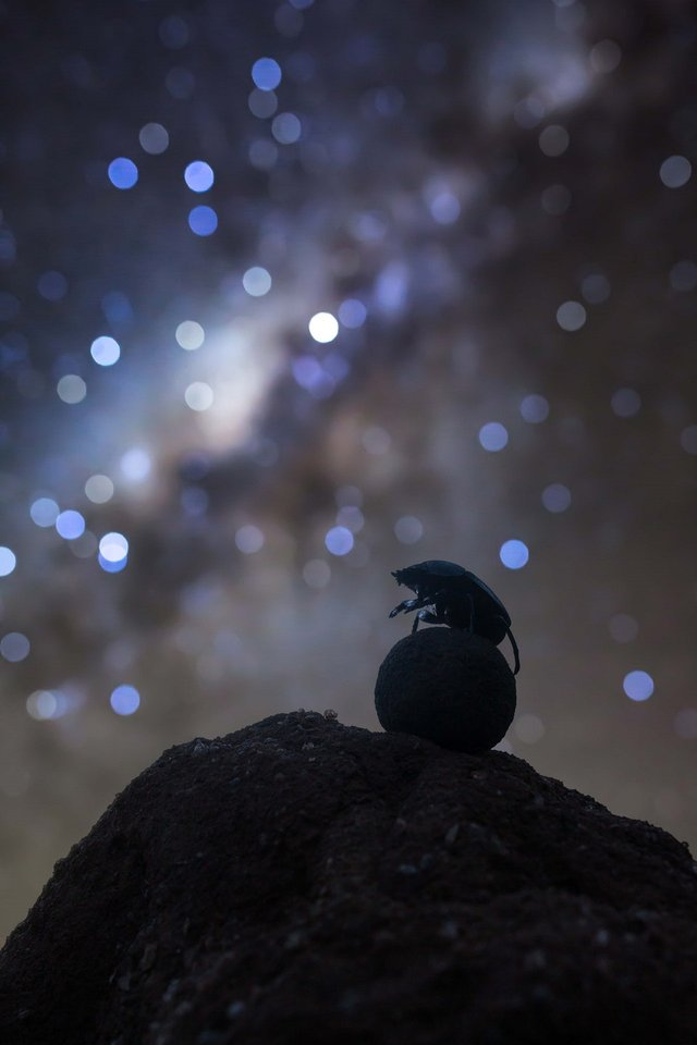 Celestial Navigator ('Небесний навігатор') / Robin Stuart - фото 335501