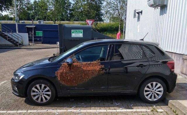 У Нідерландах бджоли захопили машину: фотофакт - фото 335905