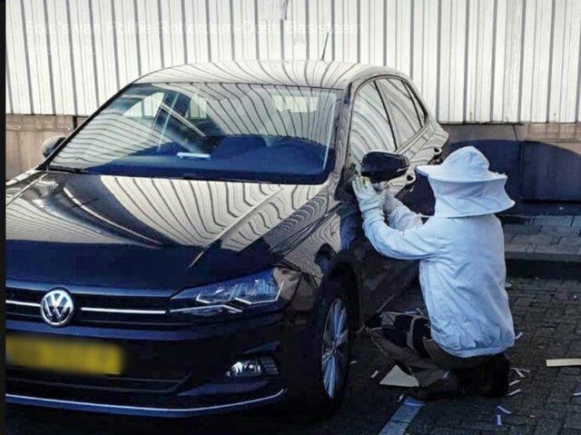 У Нідерландах бджоли захопили машину: фотофакт - фото 335906