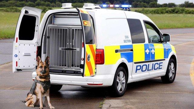 Volkswagen зробив фургон для поліцейських собак - фото 335977