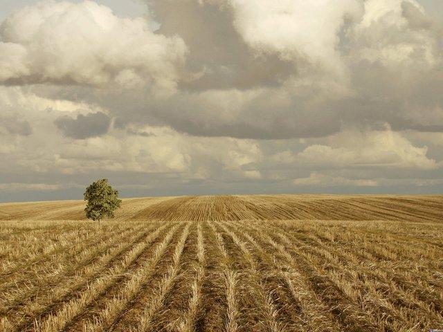 Наші предки звертали увагу на погоду в цей день - фото 336716