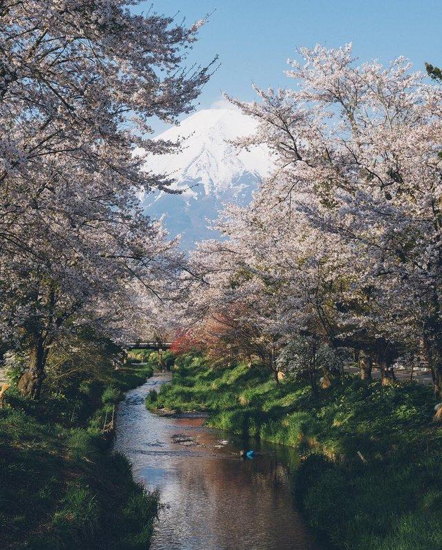 Життя в Японії: захопливі вуличні фото - фото 336729