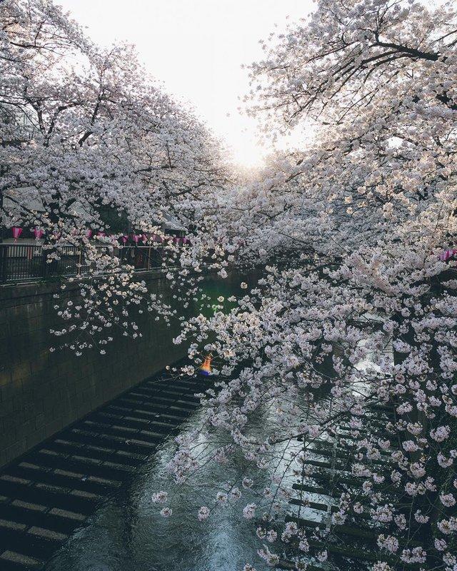 Життя в Японії: захопливі вуличні фото - фото 336733