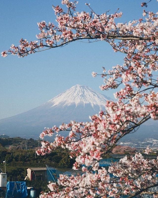 Життя в Японії: захопливі вуличні фото - фото 336737