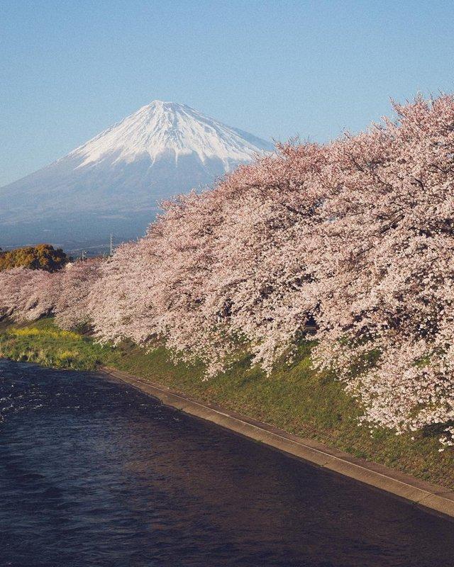 Життя в Японії: захопливі вуличні фото - фото 336741