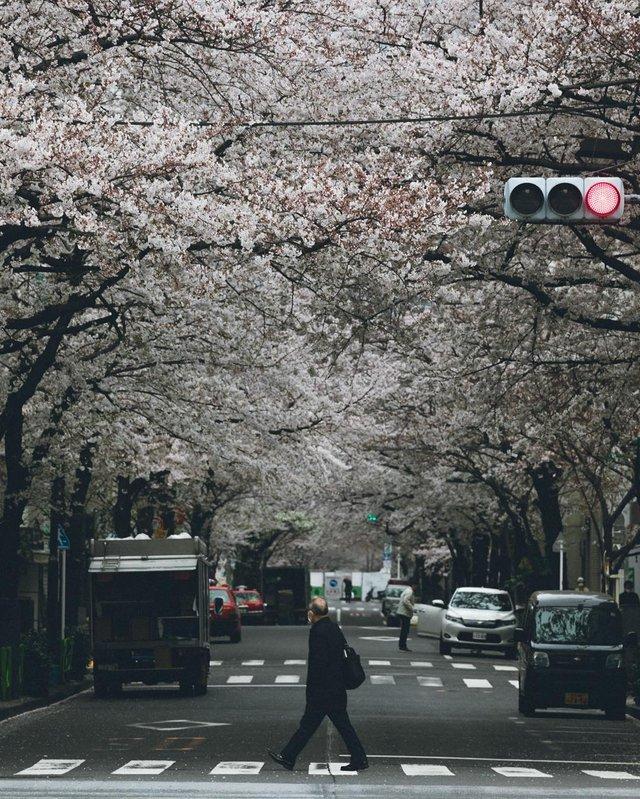 Життя в Японії: захопливі вуличні фото - фото 336743