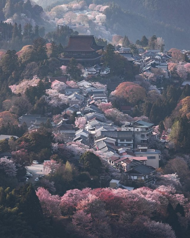 Життя в Японії: захопливі вуличні фото - фото 336746
