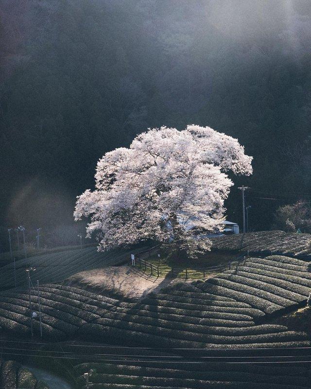Життя в Японії: захопливі вуличні фото - фото 336748