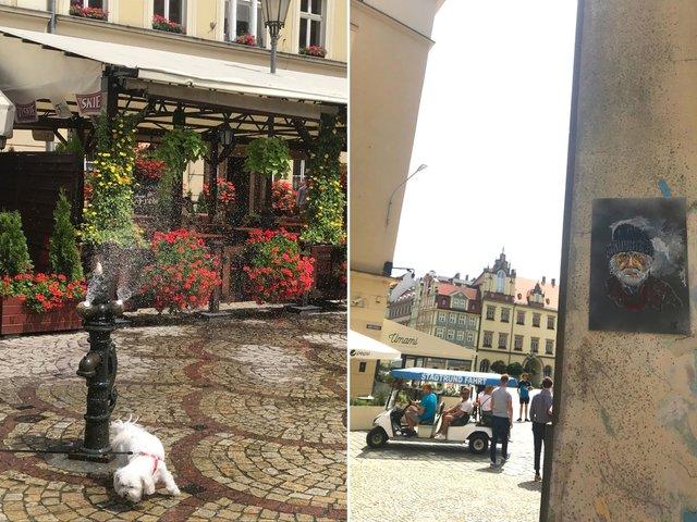 Вроцлав – місто дахів та мостів: як впіймати гнома та полюбити Польщу за 5 днів - фото 338665