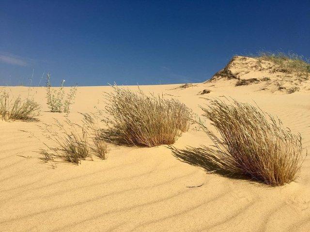 Олешківські піски – українська Сахара: як добратися та що варто знати про пустелю - фото 339458
