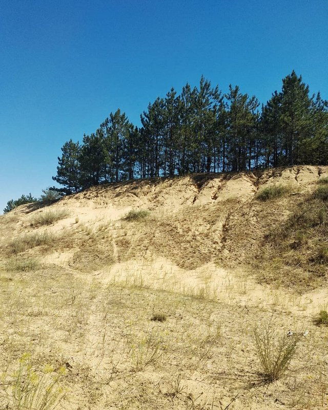 Олешківські піски – українська Сахара: як добратися та що варто знати про пустелю - фото 339461