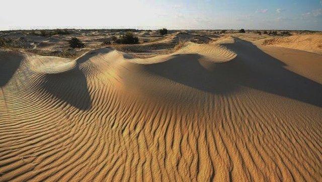 Олешківські піски – українська Сахара: як добратися та що варто знати про пустелю - фото 339463