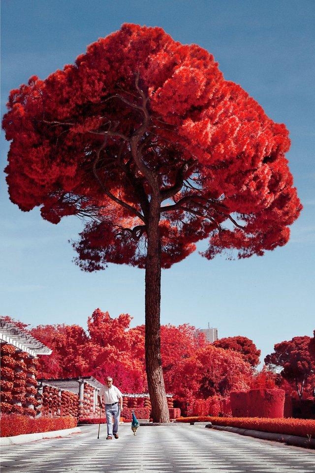 Француз показав інфрачервоний Мадрид: вражаючі фото - фото 339583