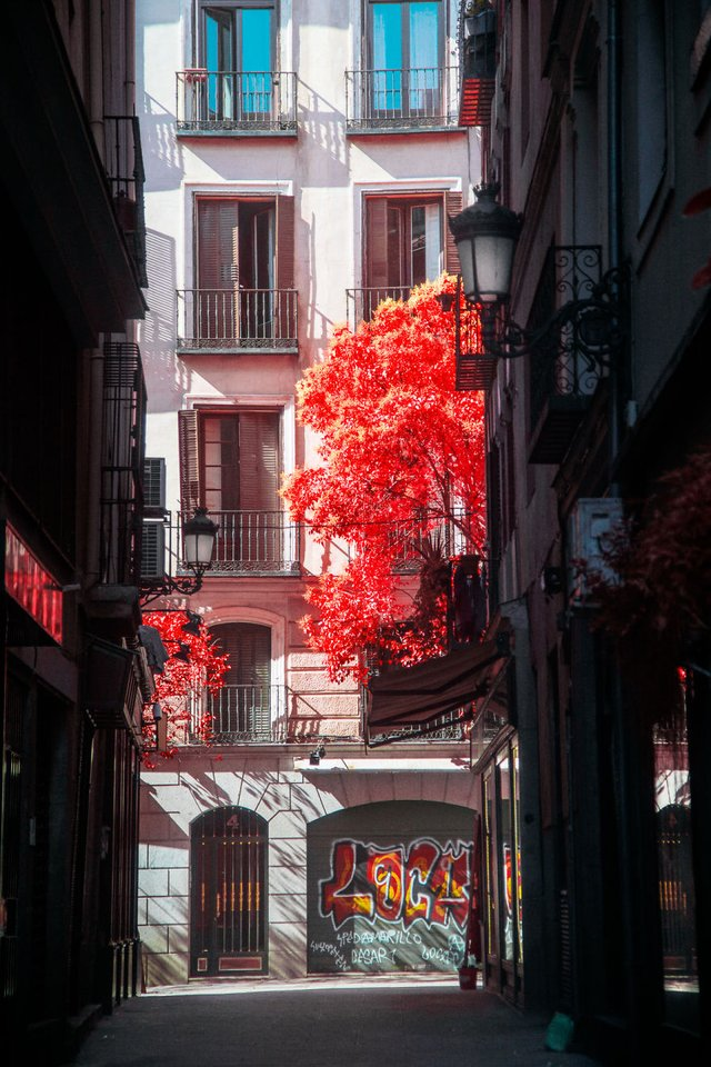 Француз показав інфрачервоний Мадрид: вражаючі фото - фото 339586