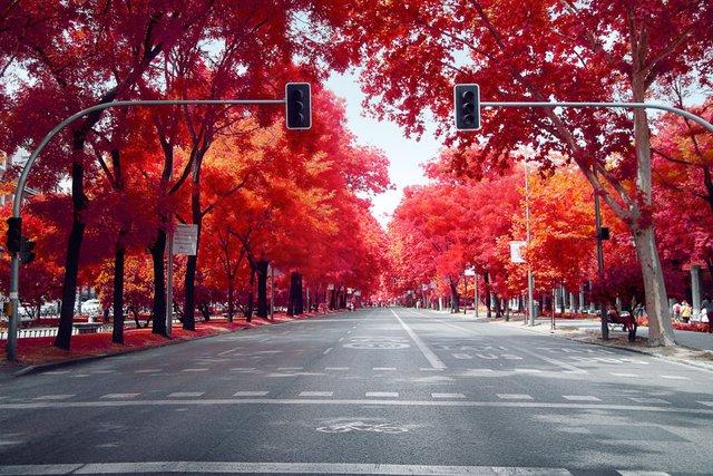 Француз показав інфрачервоний Мадрид: вражаючі фото - фото 339589