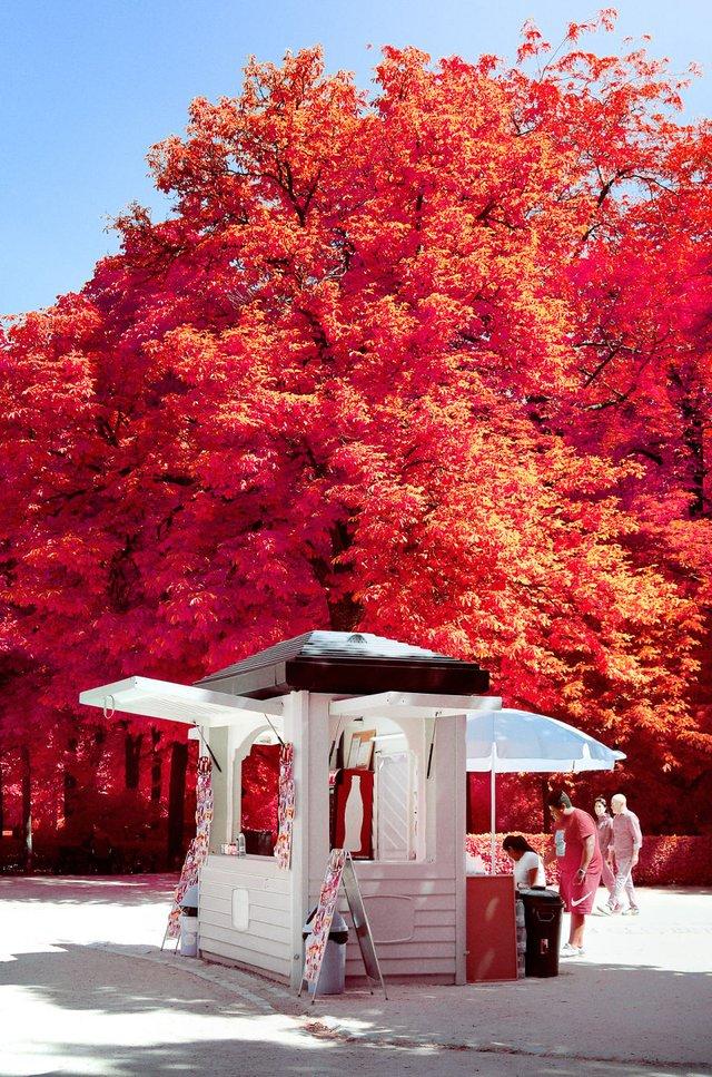 Француз показав інфрачервоний Мадрид: вражаючі фото - фото 339591