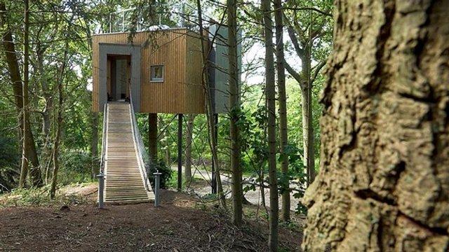 У Данії відкрили перший готельний номер на дереві - фото 339625