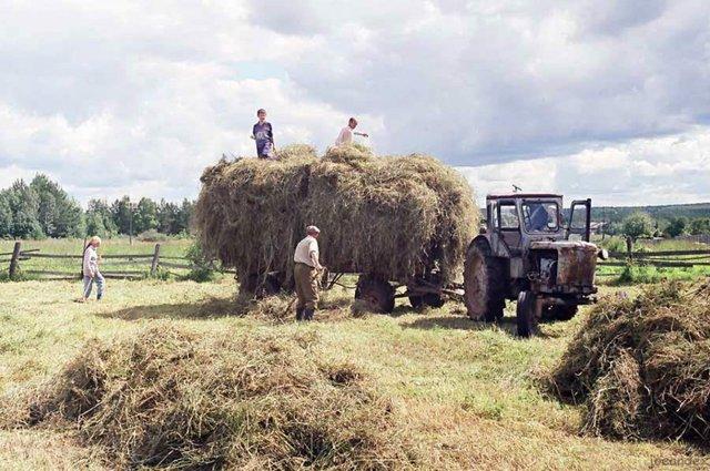 У цей день категорично не можна косити траву - фото 339910