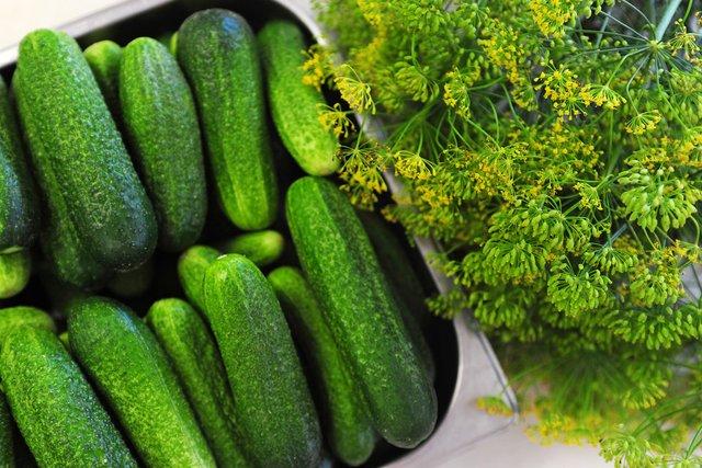 Як приготувати малосольні огірки: швидкі покрокові рецепти засолювання - фото 340355