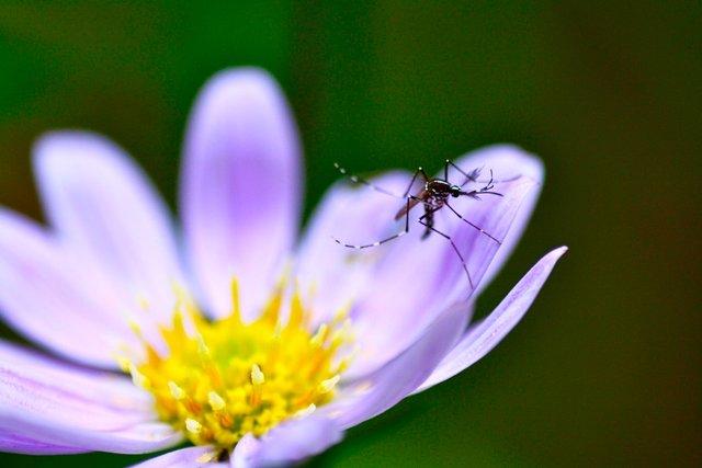 Спіралі проти комарів викидають у повітря шкідливі речовини - фото 340512