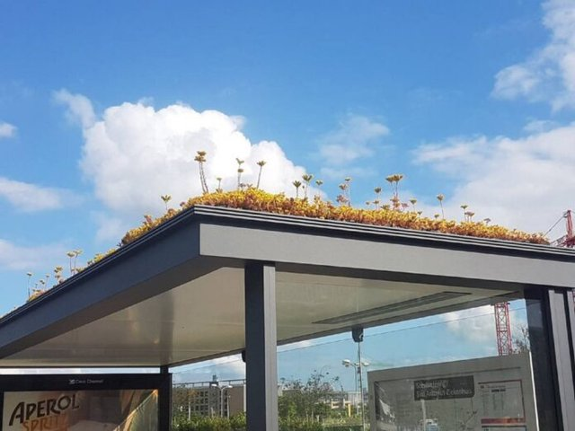 У Нідерландах на дахах автобусних зупинок висадили квіти - фото 341457