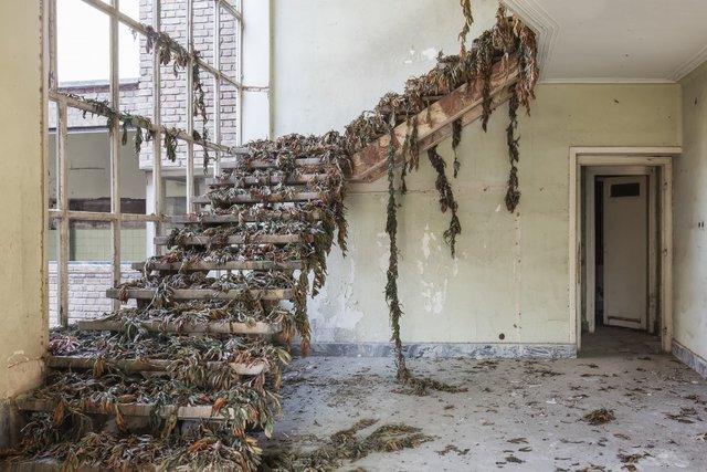 Природа забирає своє: вражаючі фото занедбаних споруд столиці Ірану - фото 342358