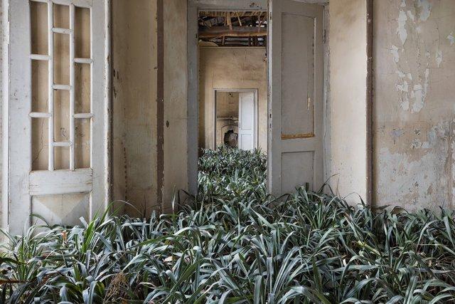 Природа забирає своє: вражаючі фото занедбаних споруд столиці Ірану - фото 342362